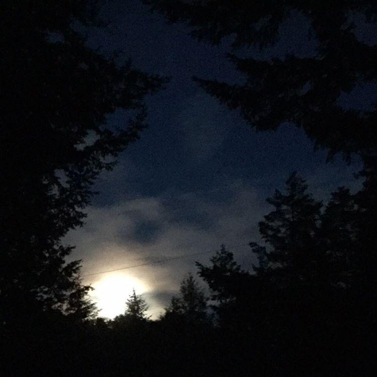 Cool moon through the trees notilter moon moonlight night nightskyhellip