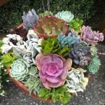 Succulent Planter Arrangement