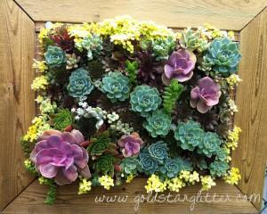 Vertical Succulent Wall Garden Frame