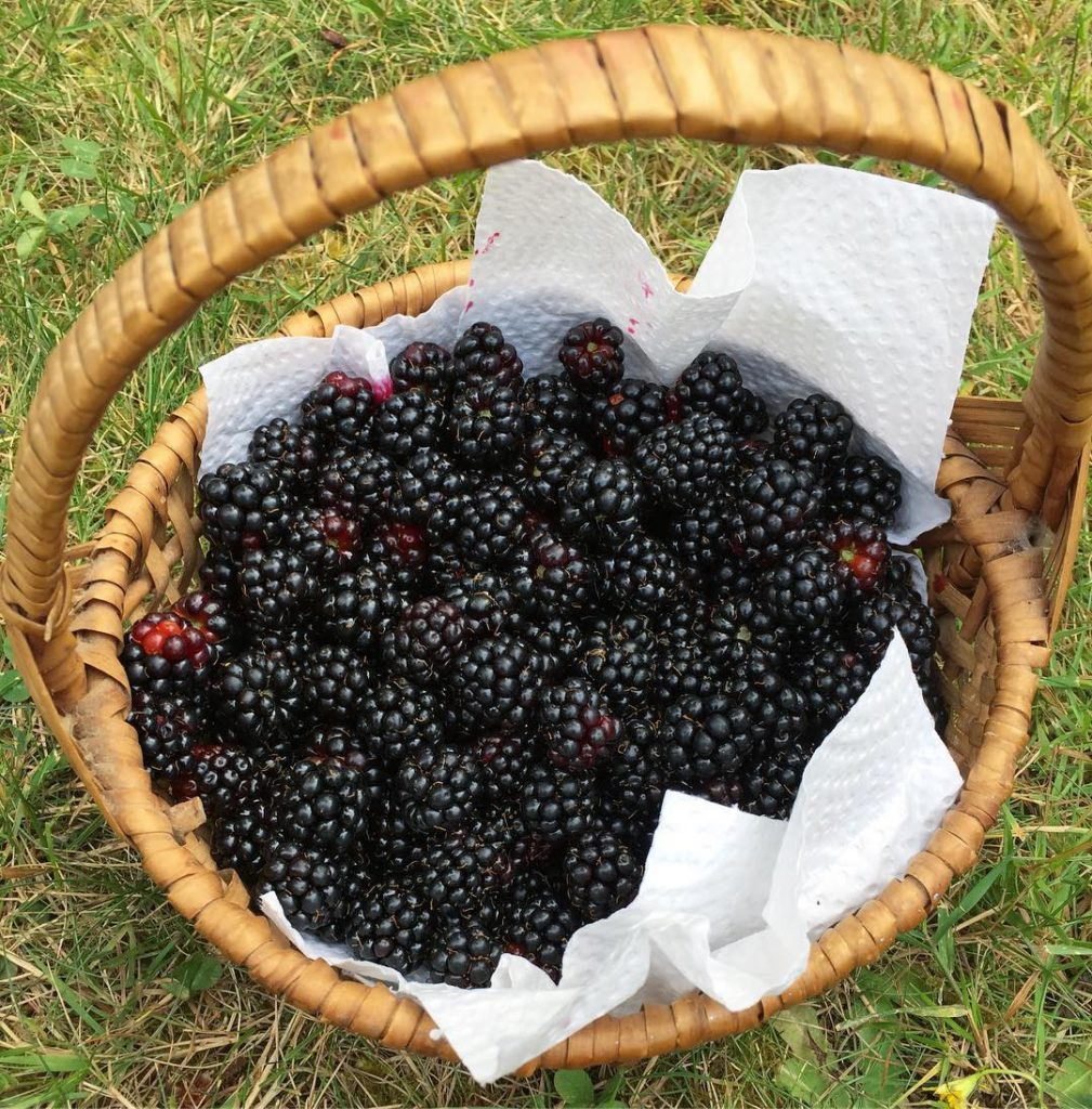 Basket of blackberries my kids and I picked I usedhellip