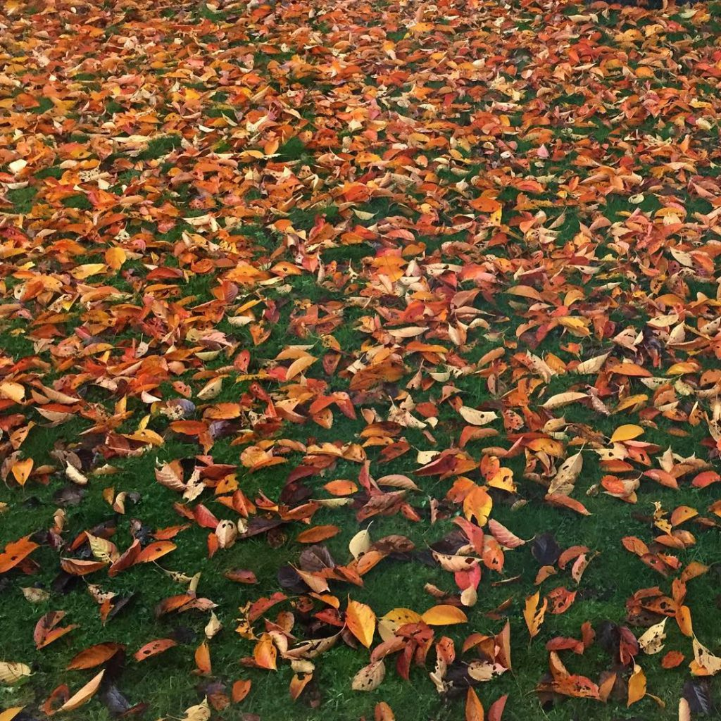 Fall colored leaves on the lawn Beauty is in thehellip